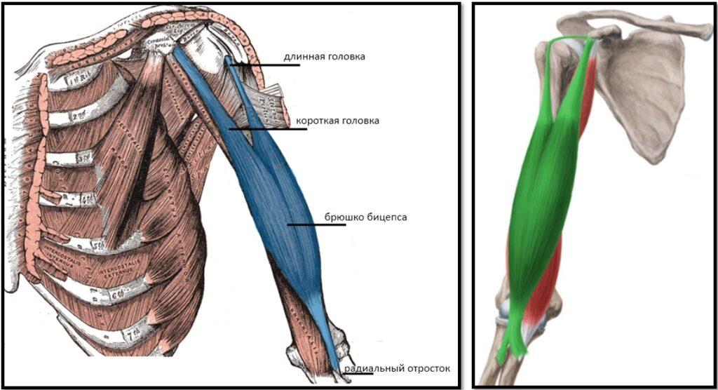 Мази бальзамы при остеохондрозе
